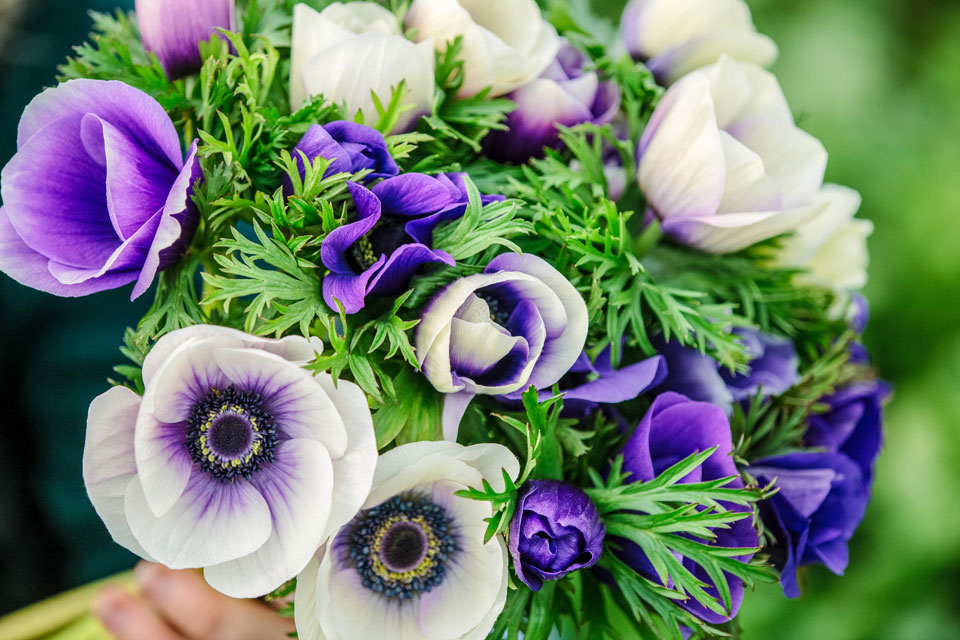 Bouquet from Spring 2014, anemones