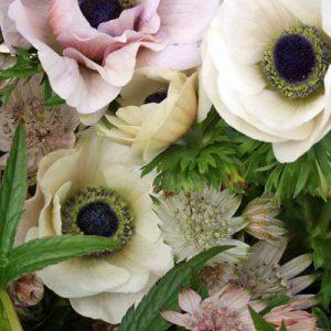 Anemone close up