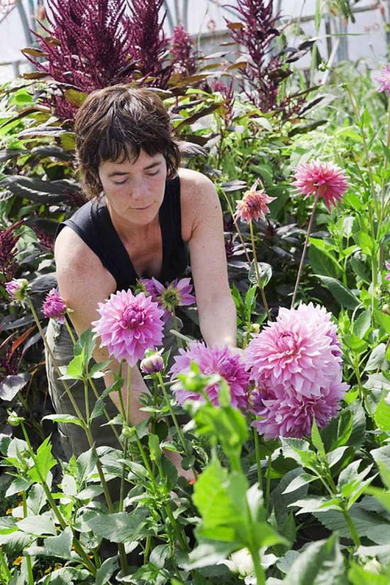 Green and Gorgeous, an ethical flower company which grows, arranges and sells locally grown flowers.