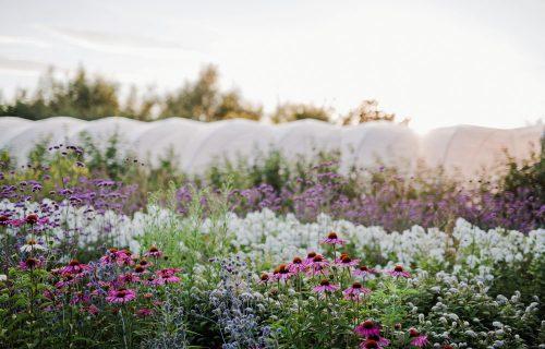Field Grown Flowers