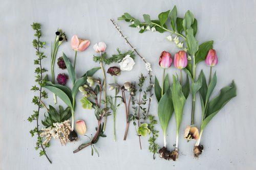 spring-flowers flay lay by Eva Nemeth