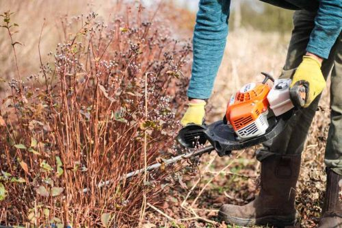 Using a hedge trimmer to cut back perennials