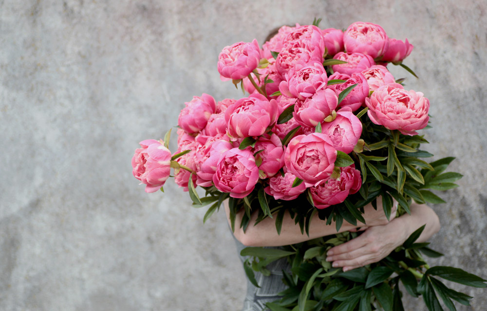 Peonies grown in Oxfordshire
