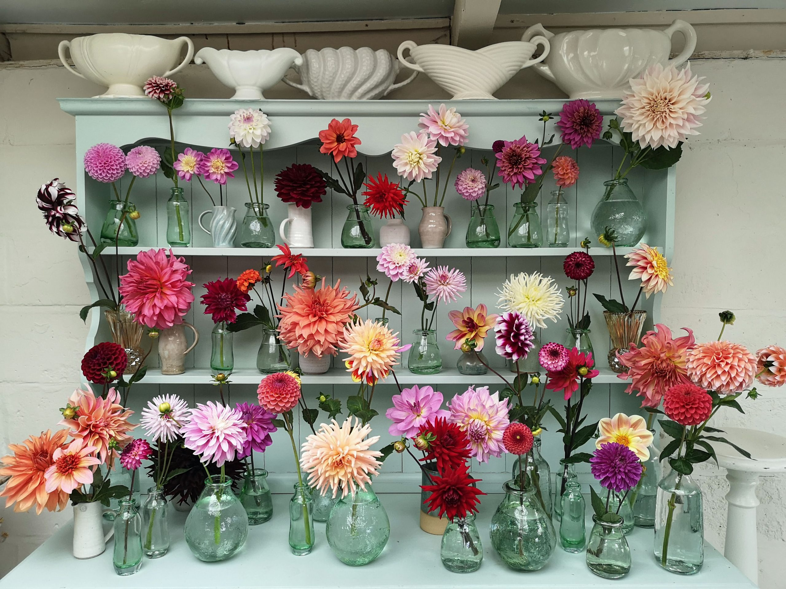 Dahlias That Make The Cut Green And Gorgeous Flowers