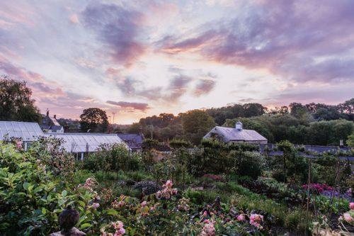 Sunrise garden shot by Eva Nemeth